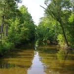 Harlowe Canal, Newport North Carolina